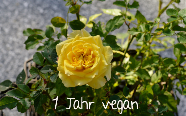 1 Jahr vegan - my first veganniversary